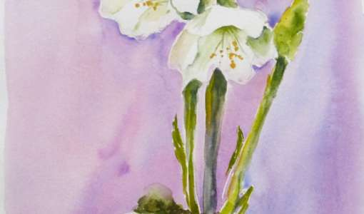 Leichte Techniken in der Blumen-Aquarellmalerei